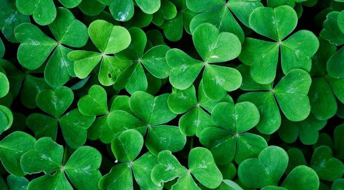 10 ervas e flores sagradas dos celtas para ter sempre por perto