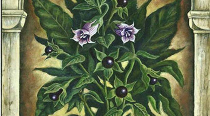 Flor de Belladonna e o vôo das feiticeiras: contribuições à homeopatia